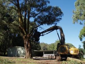 Volvo 290 excavator with logmate felling head