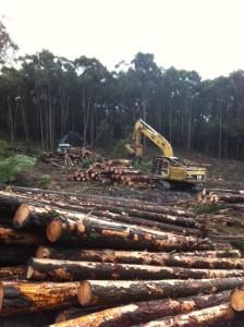 excavator handling pine
